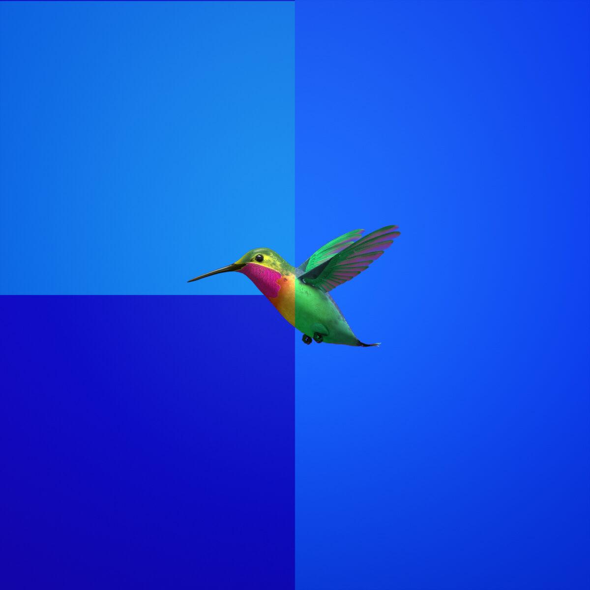 SQUARE-BIRD-1600
